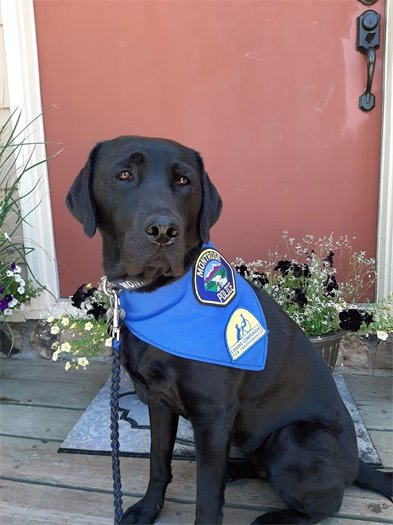 """Police Department Welcomes Facility Dog  """"Apple"""" To Force"""