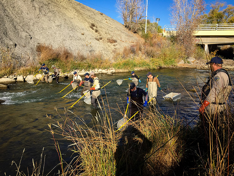 Colorado Parks and Wildlife Fish Survey